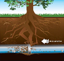 Graphic of root intrusion damages on underground sewer line.