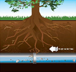 Graphic of tree roots beginning to cause obstruction in underground sewer pipe.