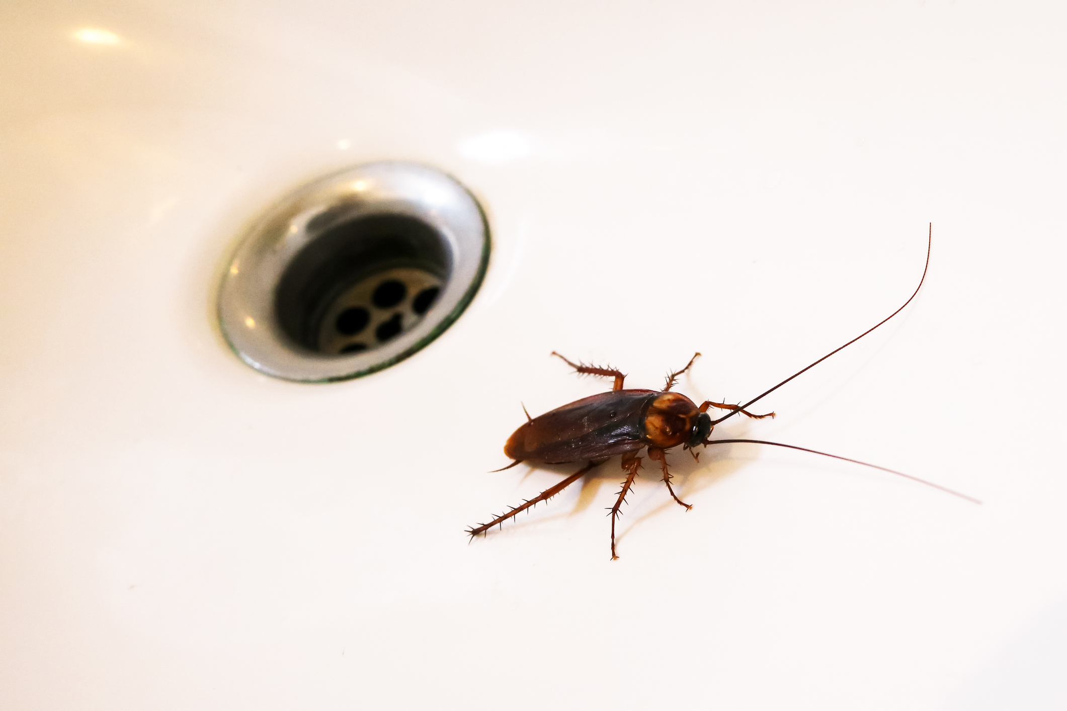pests and plumbing