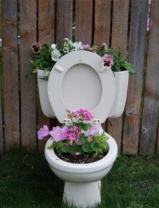 Toilet setting in grassy yard near fence with flowers planted in bowl and tank.