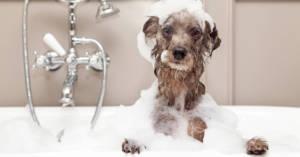 petproofing your plumbing