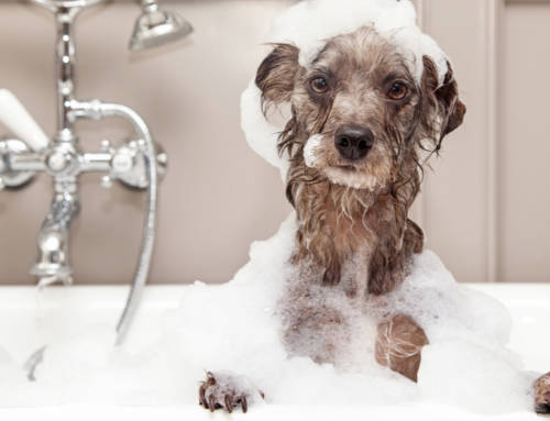 4 More Ways to Pet-Proof Your Plumbing