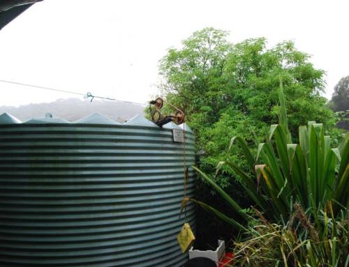 All About Rainwater Harvesting and What It Can Do